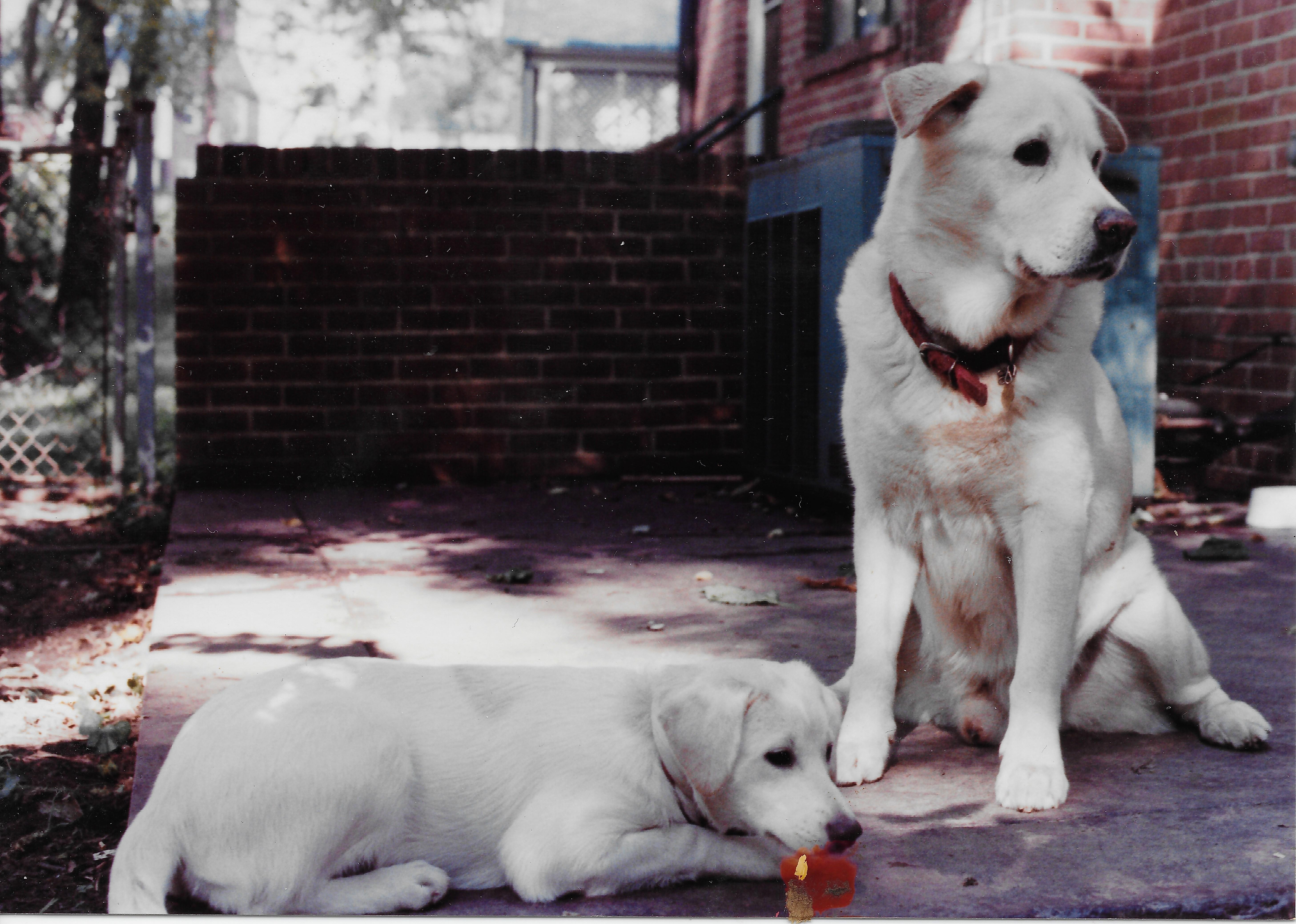Molly and Otis 2